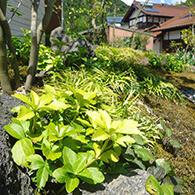 足元を苔と下草が彩る サムネイル