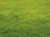 ロンパーフィールド ―校庭緑化ベース用改良ノシバ―
