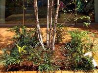 スミリン・シンプル・サポート® ―樹木地下支柱材―