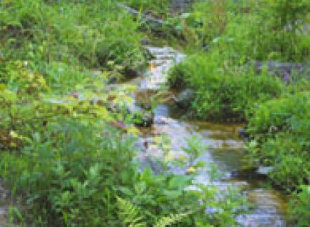 ウィディーマット® -野草のマット-イメージ